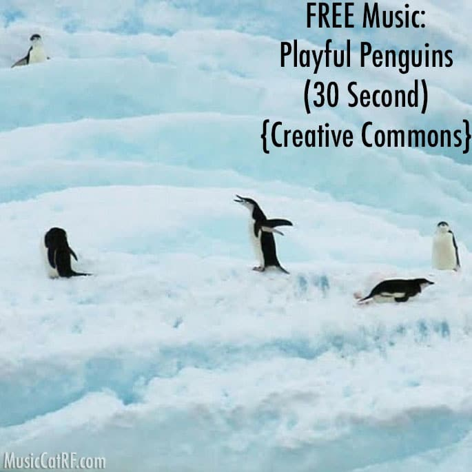"""FREE Music: """"Playful Penguins"""" Song (30 Second) {Creative Commons}"""