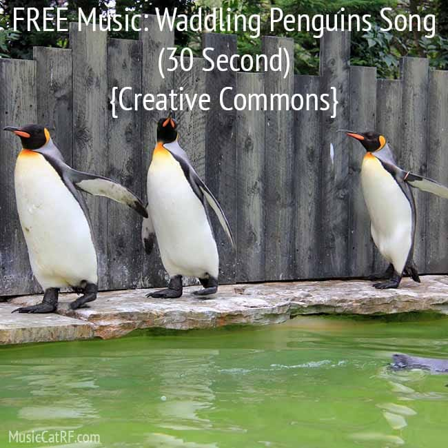 "FREE Music: ""Waddling Penguins"" Song (30 Second) {Creative Commons}"