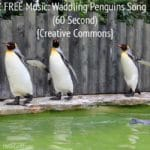 """FREE Music: """"Waddling Penguins"""" Song (60 Second) {Creative Commons}"""
