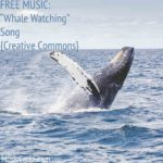 "FREE MUSIC: ""Whale Watching"" Song {Creative Commons}"